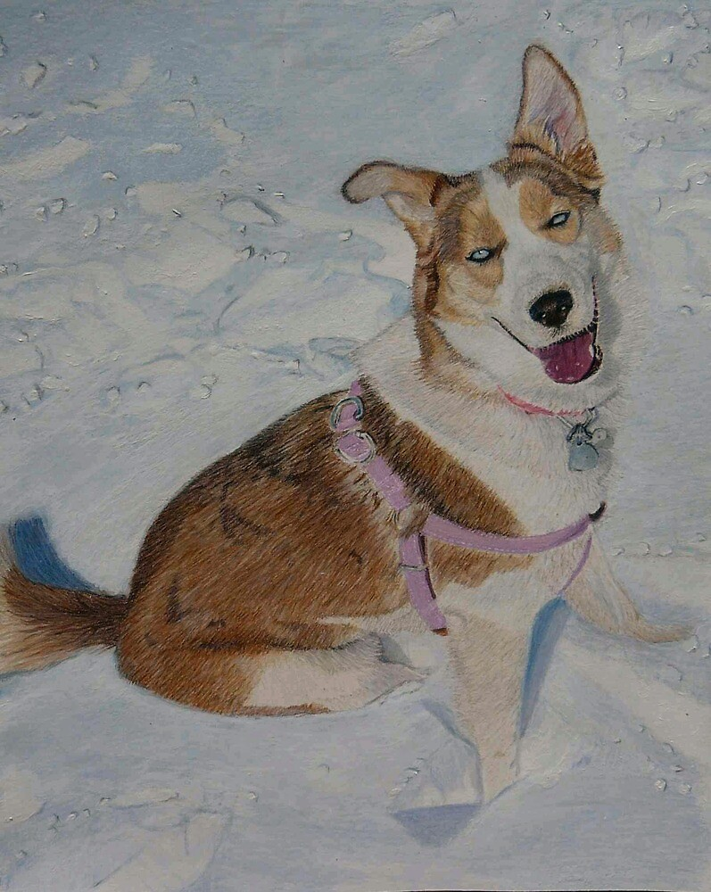 Blue - Portrait of a Siberian Husky in the Snow by Patricia Barmatz