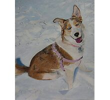 Blue - Portrait of a Siberian Husky in the Snow Photographic Print