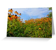 Cone Flowers Hyannis ,Massachusetts USA Greeting Card