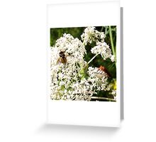 Fly and Longhorn Beetle Greeting Card