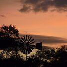 Sunset by LivWildlife