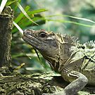 The Lizard by JohnBuchanan