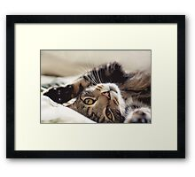 biggles has a plan.. Framed Print