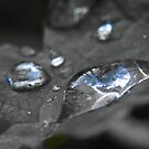 Rain drops by Joel Johnston