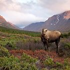 Moose in a Mountain Valley by Tim Grams