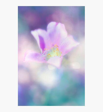 Fleur IV Photographic Print