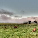 Cows and Fog by -CO-