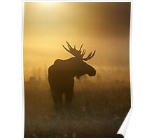 Bull Moose in Fog Poster