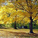 Central Park, New York City  by Alberto  DeJesus
