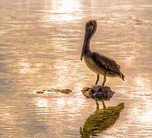 Pelican by njordphoto