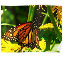 Tiffany lamp Butterfly Poster