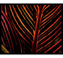 Patterns in nature.  Photographic Print