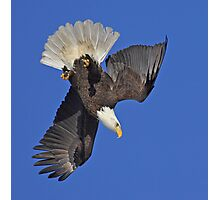 Diving Eagle Photographic Print
