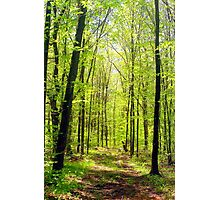 Summer woods Photographic Print
