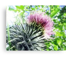 Thistle Canvas Print