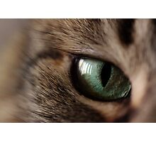Green Eyed Girl II Photographic Print