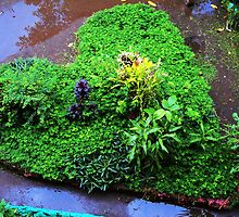 green, grass- filled  heart  by mariatheresa