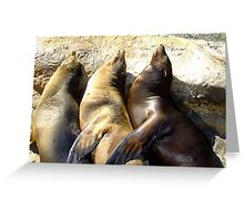 Sealions Greeting Card