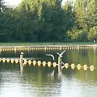 birds on pole dancing by yellow floats by LisaBeth