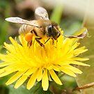 Bee by Belinda Fletcher