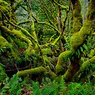 A Green Place by Charles &amp; Patricia   Harkins ~ Picture Oregon