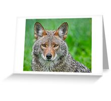 Coyote pretty Greeting Card