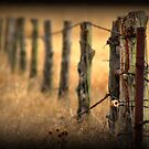 Following the Fence by amandameans
