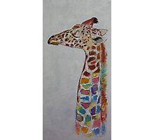Giraffe Photographic Print