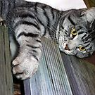 My Beautiful Mia...Waiting Patiently To Dive Bomb Princess Kendra. by Toni Kane