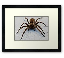 Wolf Spider Framed Print