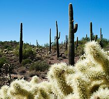 Choia Cactus by George I. Davidson