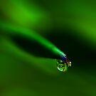 Gorgeous Gem of a Drop by Eileen Aquiningoc  Schwake