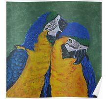 Preening Parrots Poster