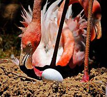 Flamingo and Egg by George I. Davidson