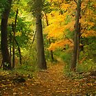 The Long and Winding Path by KatMagic Photography