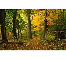 The Long and Winding Path Photographic Print