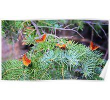 Butterfly Wonders Poster