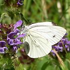 Small White by SophiaDeLuna