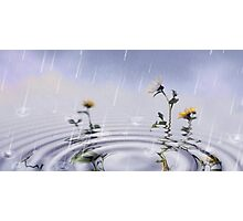 Sunflowers In The Rain Photographic Print