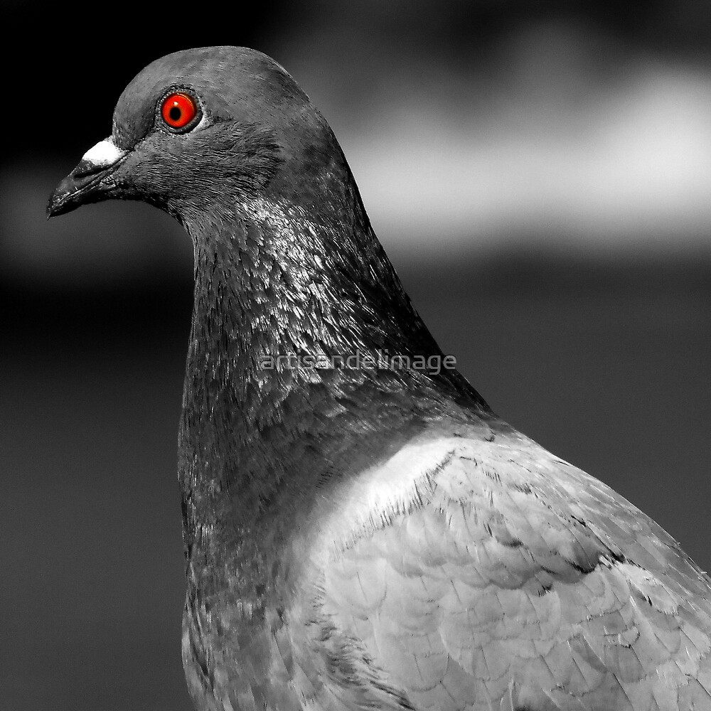 No Red-Eye Reduction by artisandelimage