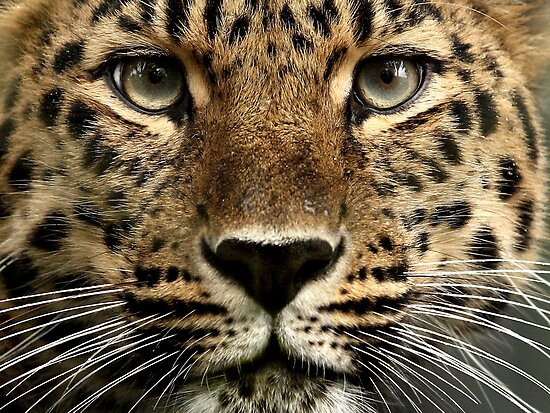 Beauty Up Close! by Mark Hughes