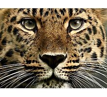 Beauty Up Close! Photographic Print
