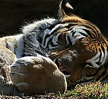 Big Paws by Tugela