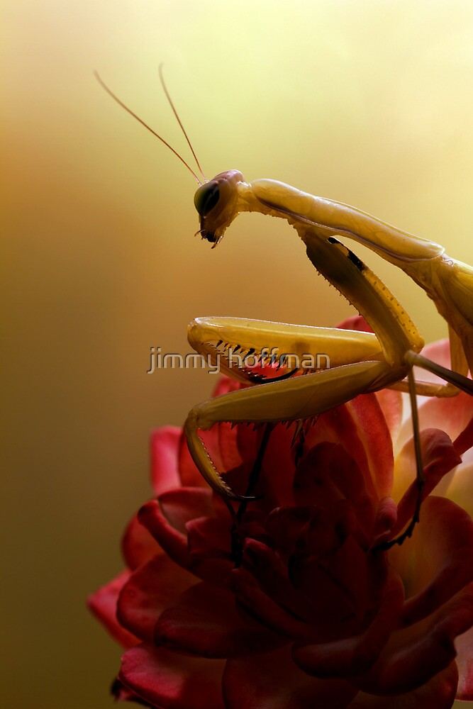 Waiting for prey by jimmy hoffman