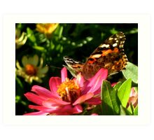 Butterfly and a Flower Art Print