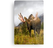 Inquisitive Moose Metal Print