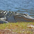 Alligator by the lake by ClaireSinclair