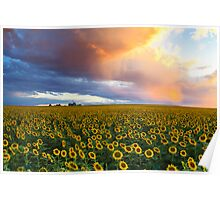 Sunflowers Sunset Poster