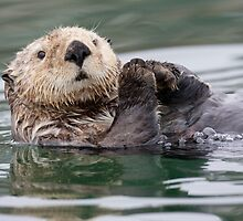 The Innoncent Face of a Sea Otter by Tim Grams
