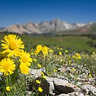 Flowers in the Rockies by Tim Grams